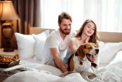 honden toegestaan in hotel