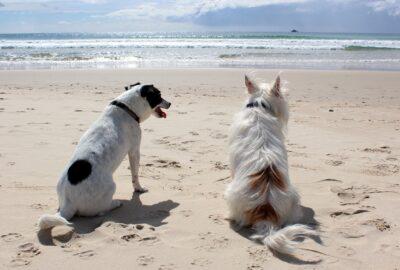 vakantie met hond aan zee